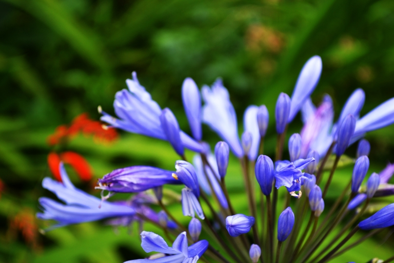 flora photography Melbourne