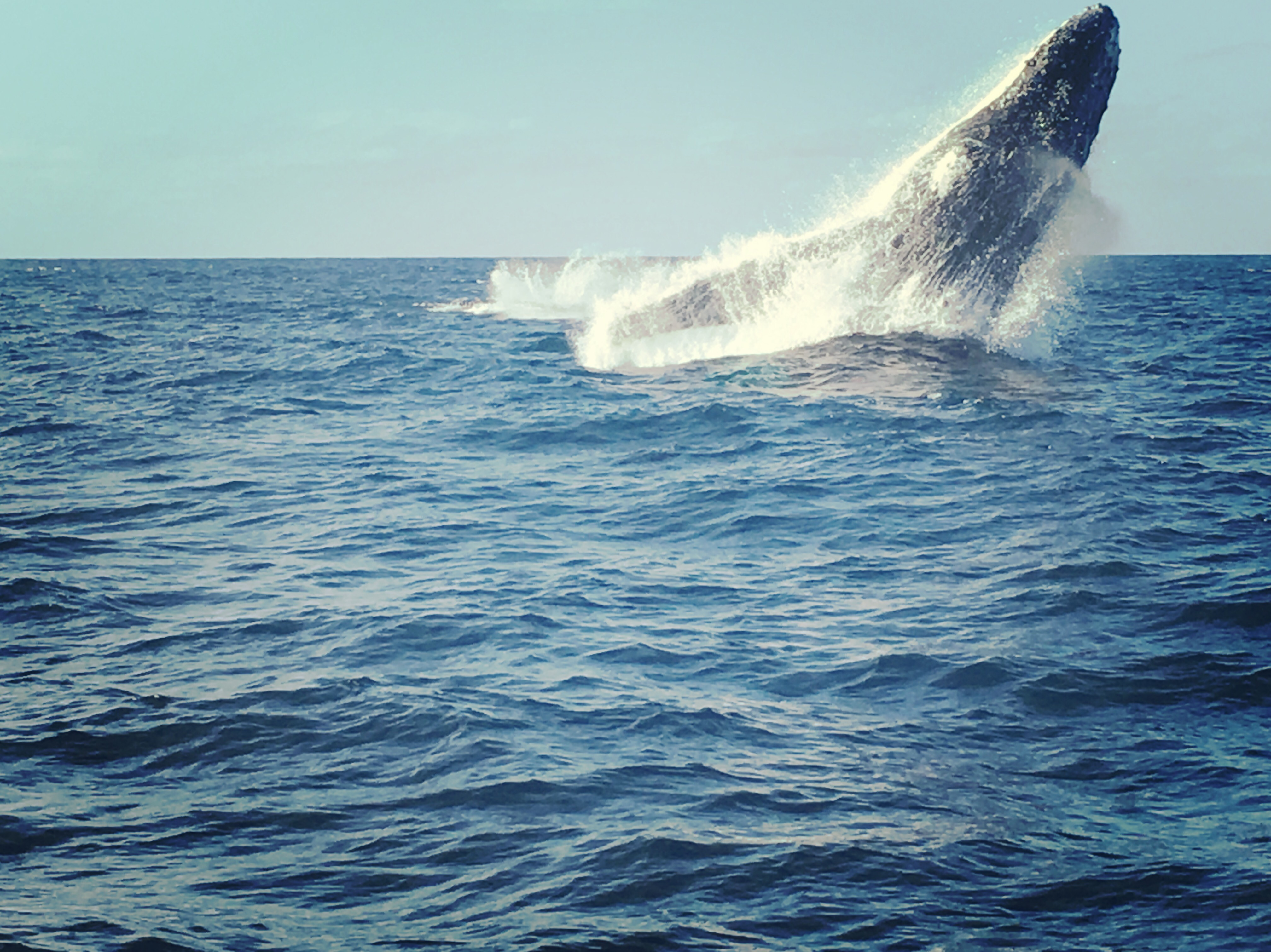 Humpback whale photography