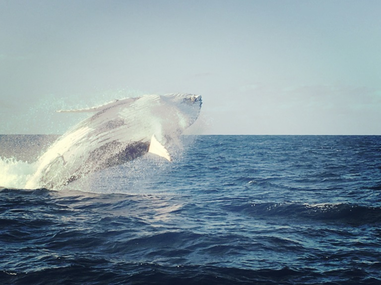 Humpback whale photography Melbourne